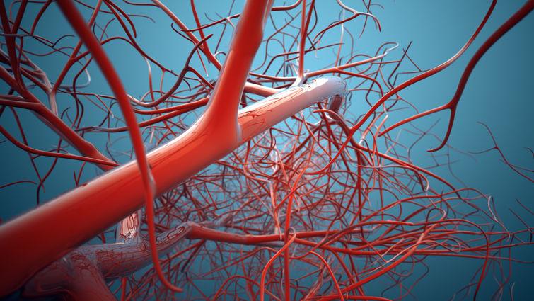 veins graphic