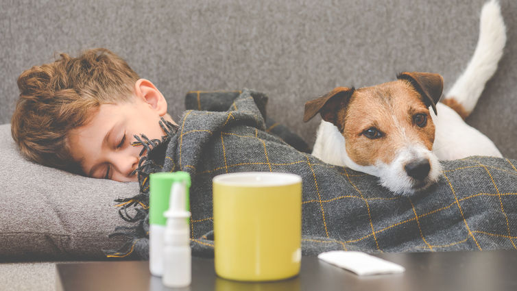 Dog guarding sick boy sleeping on sofa under plaid stock photo