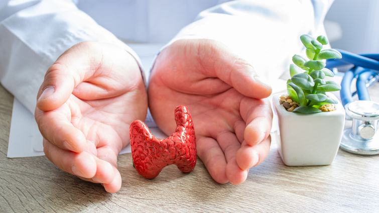 Doctor hands displaying a 3D replica of a human thyroid gland