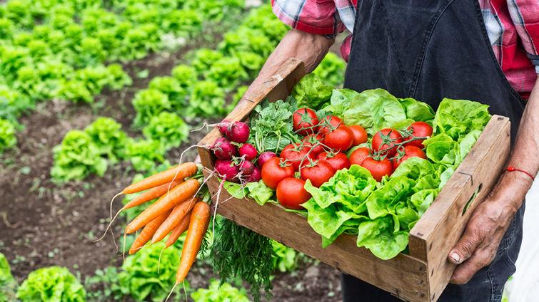 Vegetarian diet good for environment