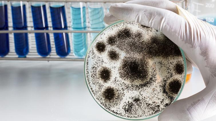 Mold contamination.