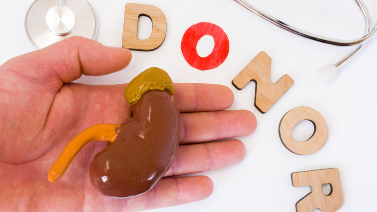 kidney in hand with donor words