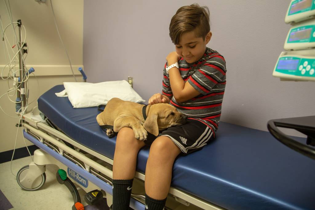 One puppy falls asleep on patient Caiden Josa, 10, from Beaumont, California.