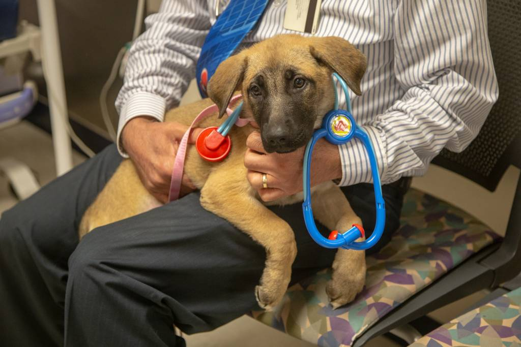 One visiting puppy wears a stethoscope as he sits on the doctor's lap.