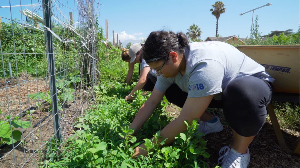 Summer Gateway service day at Huerta del Valle community garden
