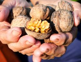 School of Public Health study says eating walnuts improves senior nutrition in unexpected ways